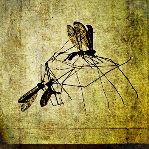 Two Mosquitos by Dag Jørgensen