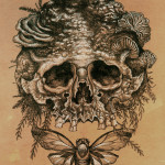 Skull and Cicada by Shaun Beaudry