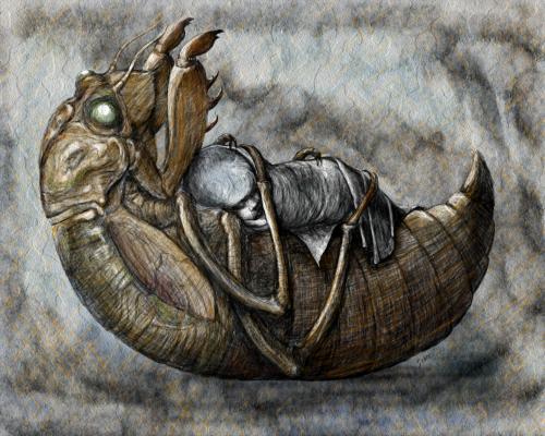 Cicada Lullaby by Linda Saboe