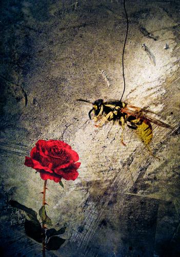 Wasp by Soare Marius