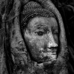 Buddha Head, Ayutthaya Thailand by Kevin Martin